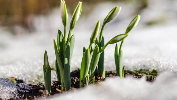 Jakie kwiaty kwitną na wiosnę