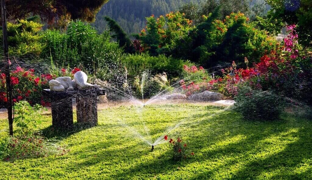 nawadnianie trawy latem
